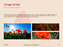 Red Poppy in the Field Presentation slide 12