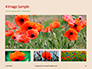 Red Poppy in the Field Presentation slide 13
