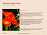 Red Poppy in the Field Presentation slide 15