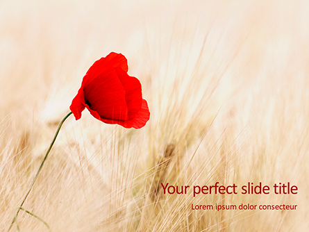 Red Poppy in the Field Presentation Presentation Template, Master Slide