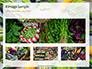 Frame of Green Organic Vegetables on Wooden Surface Presentation slide 13
