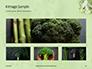 Broccoli on Green Background Presentation slide 13