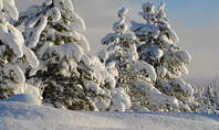 Amazing Winter Landscape Presentation Presentation Template