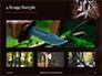 Hunting Knife and Kerosene Lamp Presentation slide 13