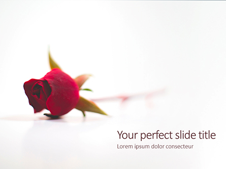 Beautiful Red Rose Flower Isolated on White Background Presentation Presentation Template, Master Slide