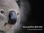 Close-up Portrait of Koala Bear Presentation slide 1