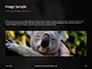 Close-up Portrait of Koala Bear Presentation slide 10