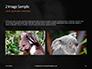 Close-up Portrait of Koala Bear Presentation slide 11