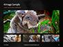 Close-up Portrait of Koala Bear Presentation slide 13