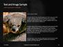 Close-up Portrait of Koala Bear Presentation slide 15
