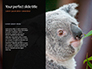 Close-up Portrait of Koala Bear Presentation slide 9