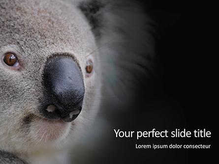 Close-up Portrait of Koala Bear Presentation Presentation Template, Master Slide