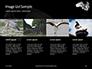 Great Egret Presentation slide 16