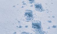 Footsteps in Snow Presentation Presentation Template