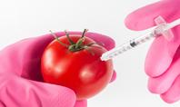 GMO Scientist Injecting Liquid from Syringe into Tomato Presentation Presentation Template