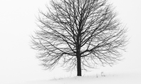 Alone Tree on a Winter Field Presentation Presentation Template