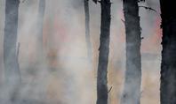 Tree Trunks in a Smoke Presentation Presentation Template