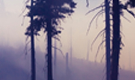 Smoke Forest after Wildfire Presentation Presentation Template